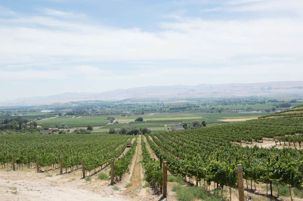 Learn about Idaho's Sunnyslope Wine Trail, right outside of Boise in Caldwell, Idaho.