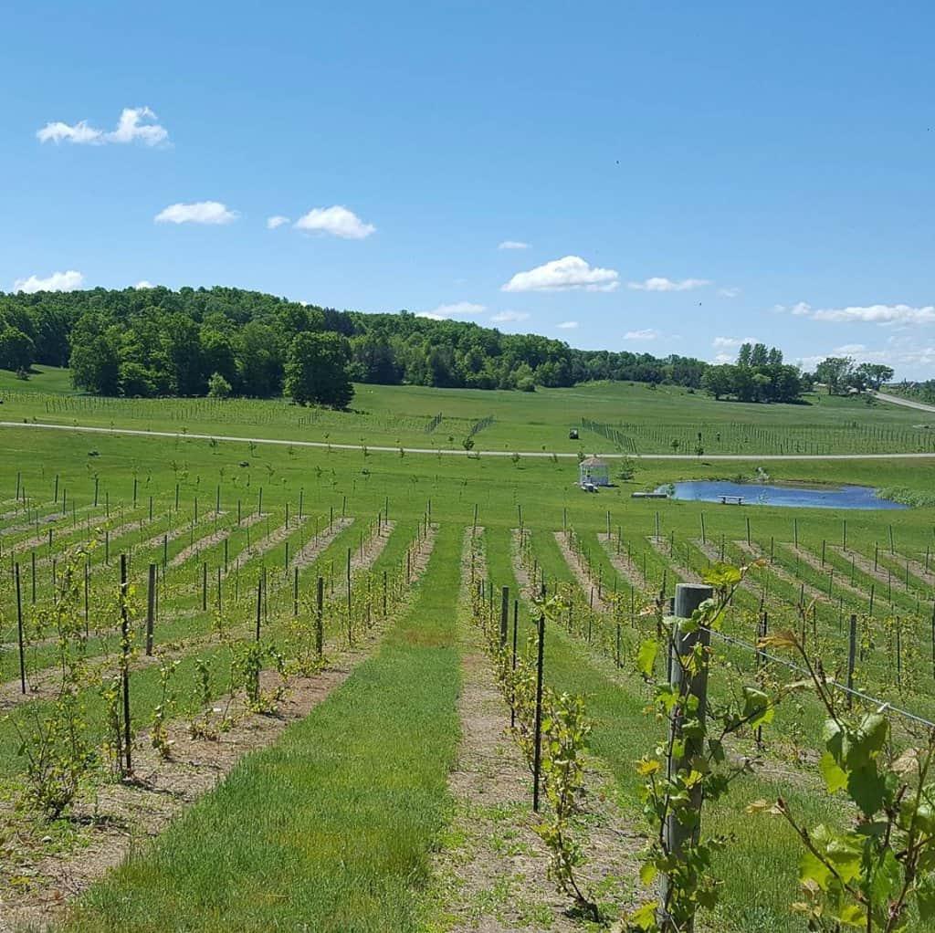 Petoskey Wine Region | Northern Michigan | Tip of the Mitt | A fun wine getaway in Petoskey area